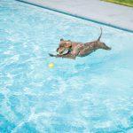 zwembad filtratie
